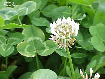 The Spring Clover Takeover